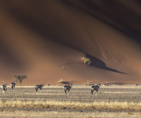 michele_buhofer_photoart_namibia
