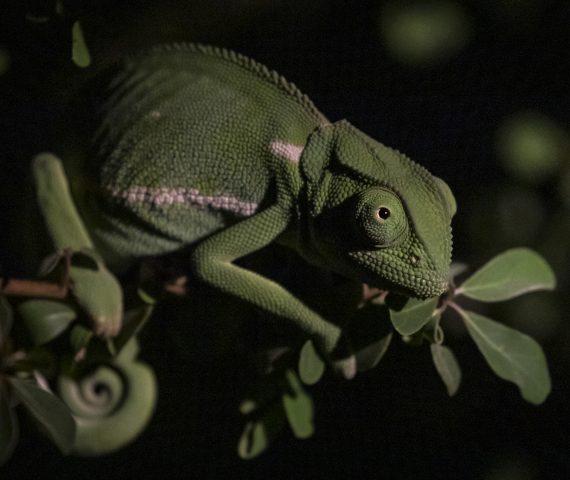 michele_buhofer_photoart_chameleon