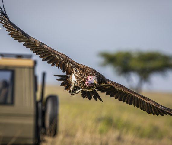 michele_buhofer_photoart_vulture